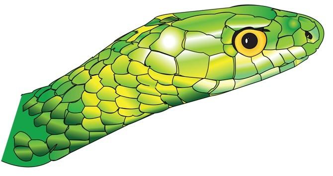 竹叶青蛇头