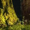 兔兔森林细部2