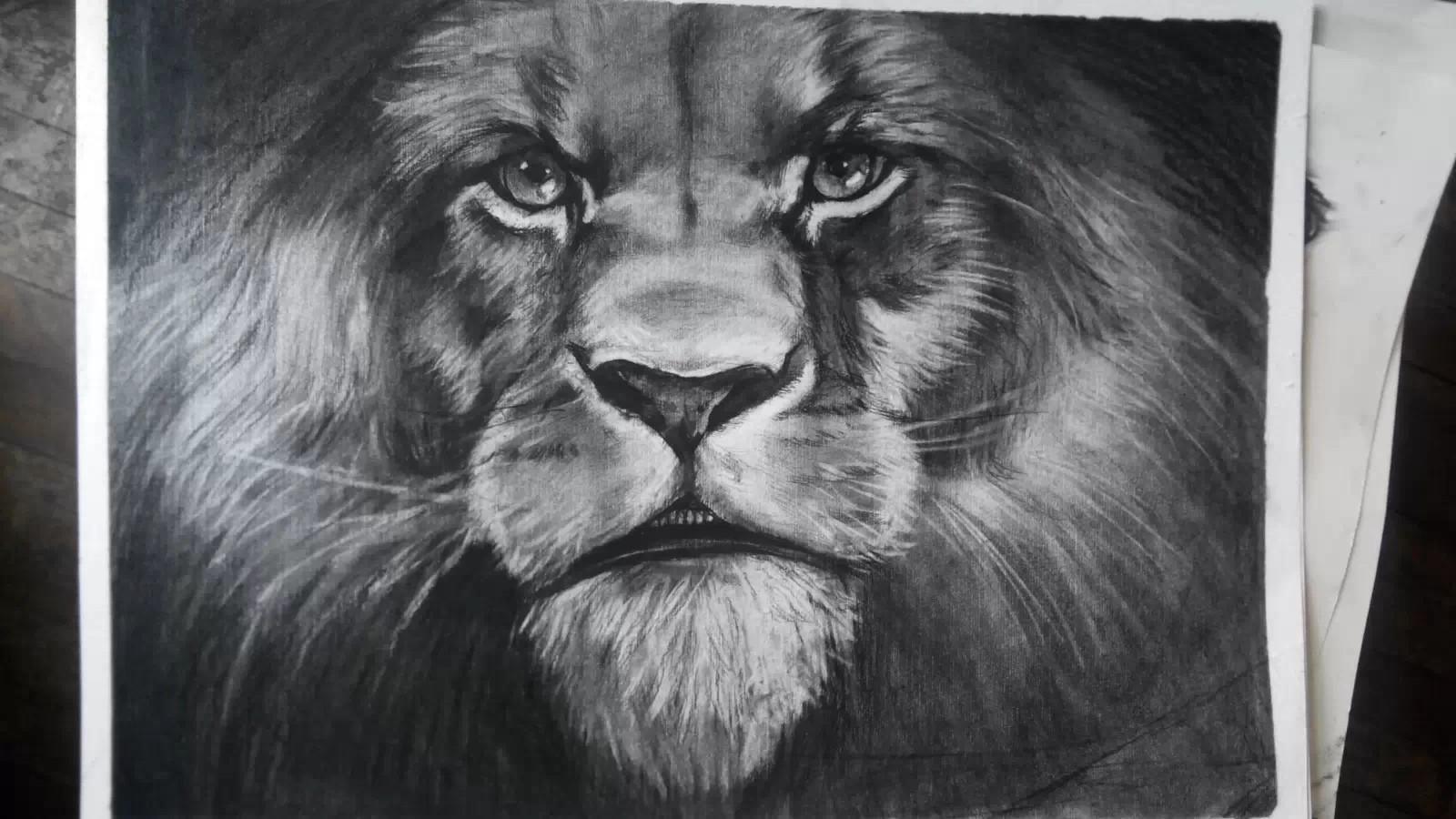 狮子素描画法步骤图
