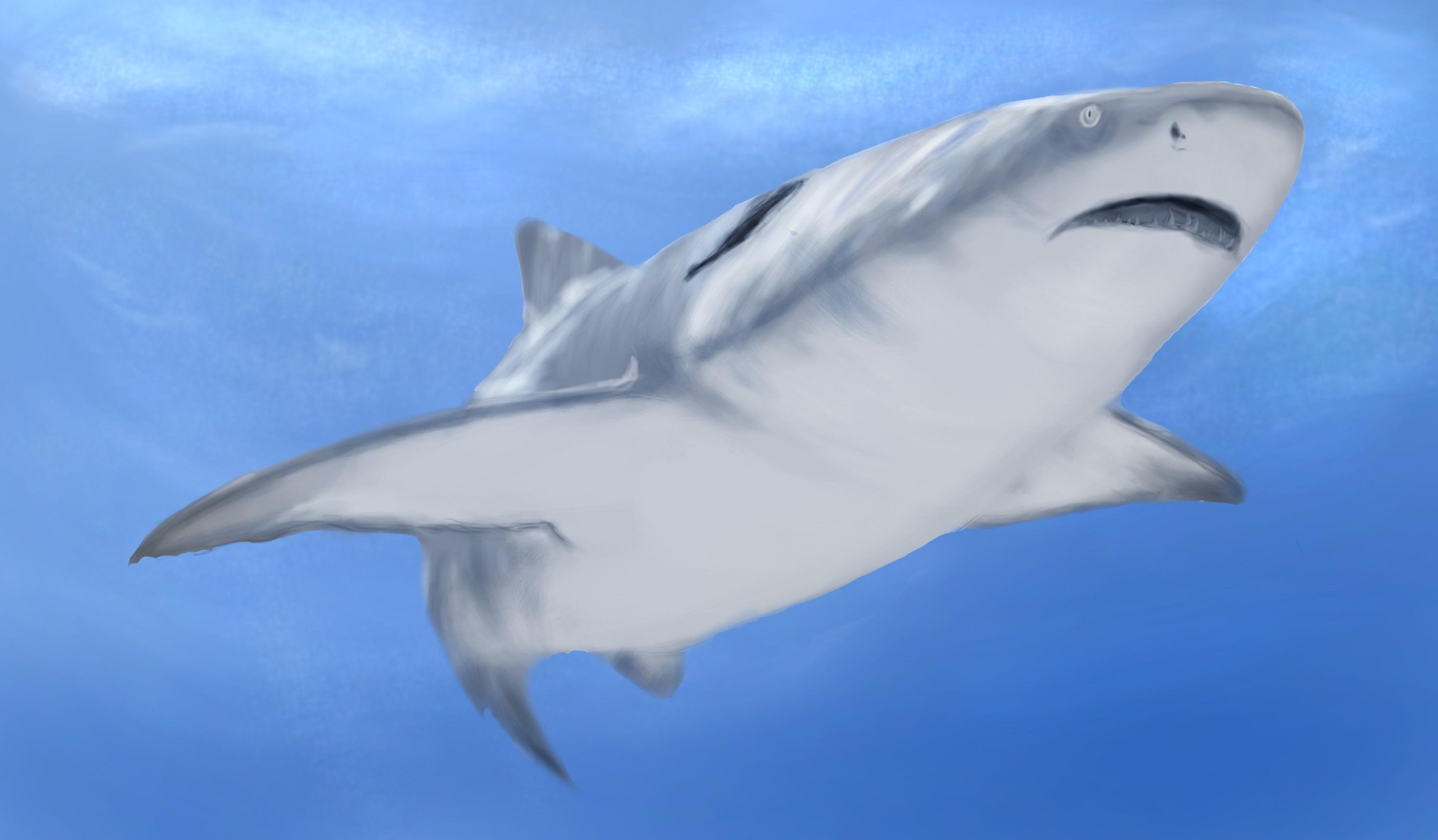 海中的鲨鱼 由 来自海岛的手 创作 | 乐艺leewiart cg